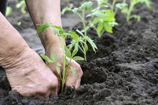 elderly person gardening