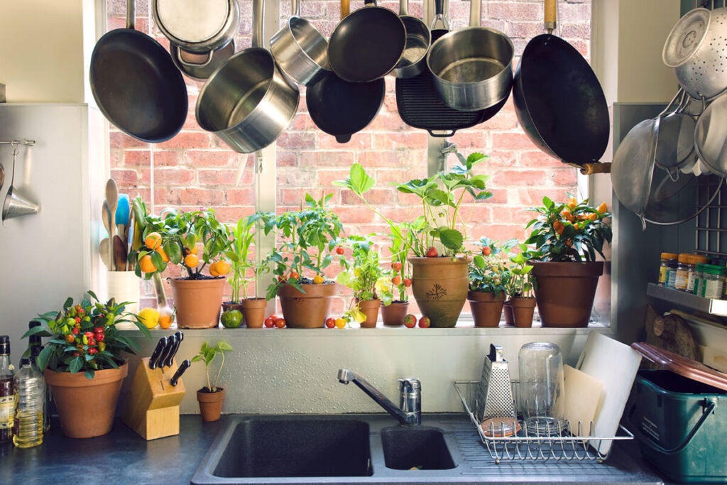 pots hanging over potted vegetables by kitchen window